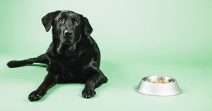 Dog and bowl with food