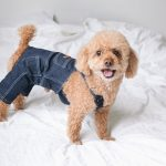 Dog standing on the bed