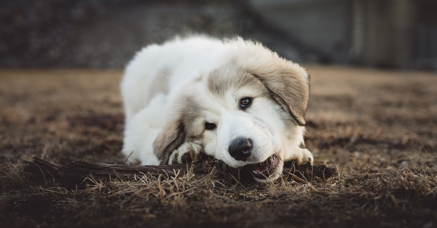 Puppy lying on the ground