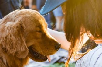 Best Dog Food for Autoimmune Disease: Change the Diet for the Better