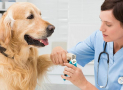 Dog Nail Grinder vs Clipper: What's the Difference