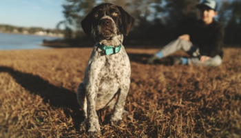 Best Bark Collar in 2021: Types and Benefits