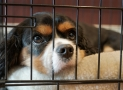 Best Dog Crates for Separation Anxiety – Reviews of the Best Products