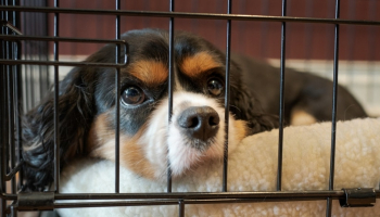 9 Best Dog Crates for Separation Anxiety – Reviews of the Best Products of 2021