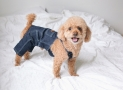 Best Dog Diapers for Male and Female Dogs in 2019