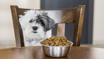 Best Dog Food for Sensitive Stomachs in 2021