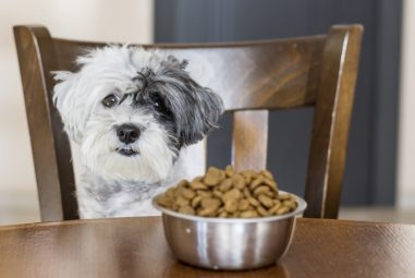 Best Dog Food for Sensitive Stomach 2020: Suitable Diets for Puppies, Mature Dogs, and Seniors