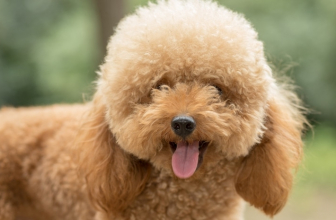 Best Dog Grooming Clippers – Your Ultimate Purchase Guide in 2021