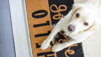 Best Electronic Dog Door in 2021: Reviews and Buying Guide