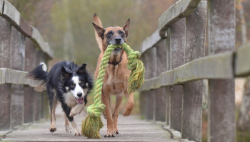11 Best Indestructible Dog Toys in 2021 Reviewed by a Certified Trainer