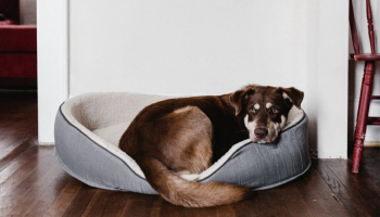11 Best Indestructible Dog Beds in 2021 Experts & Pup Parents Think Highly