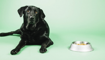 Best Large Breed Dog Food: 20 Expert Picks of 2021 for Different Needs