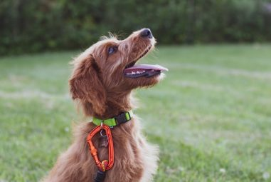 Tricks to Teach Your Dog: Detailed Training Guidelines